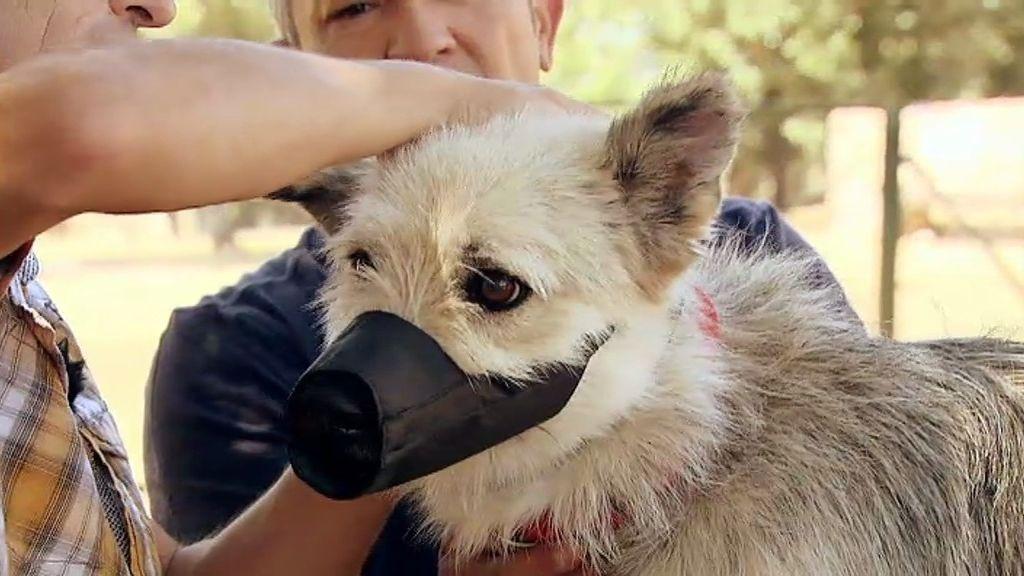 Gadget, un perro dominante y muy agresivo