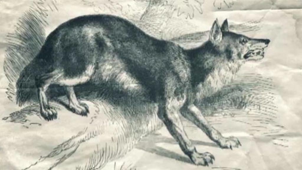 Un perro demoníaco