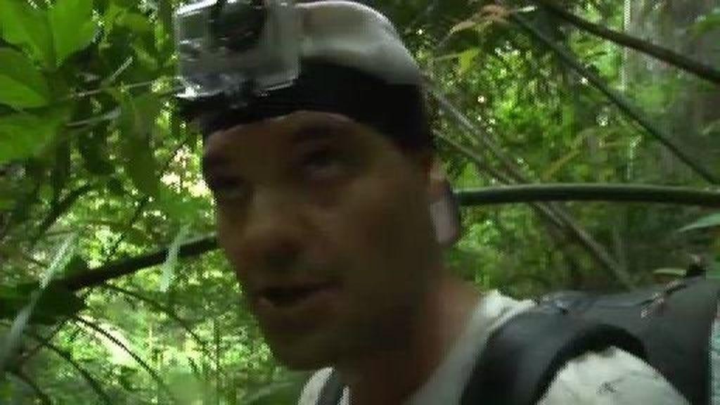 Perdidos en la jungla