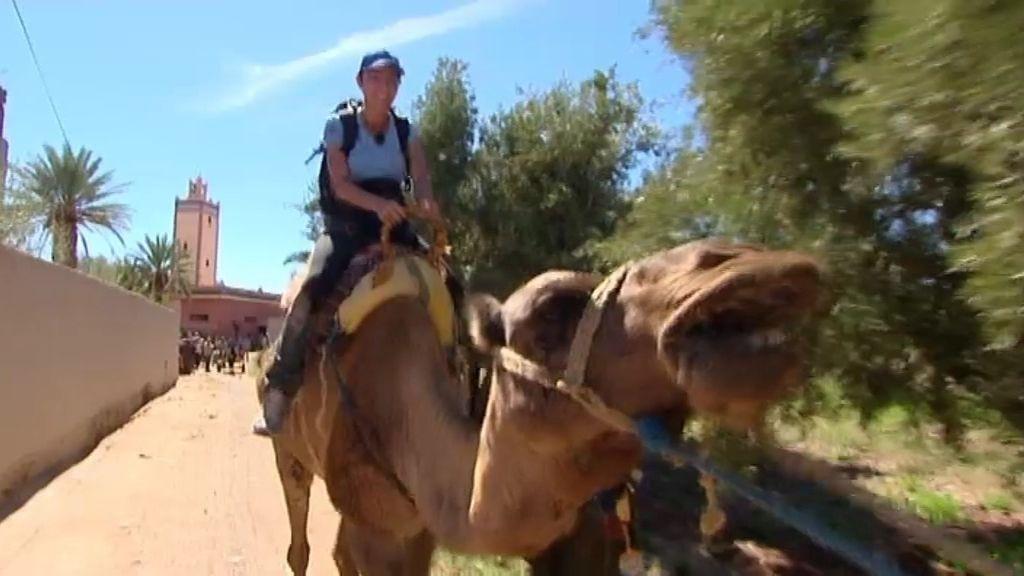 La carrera de los camellos locos