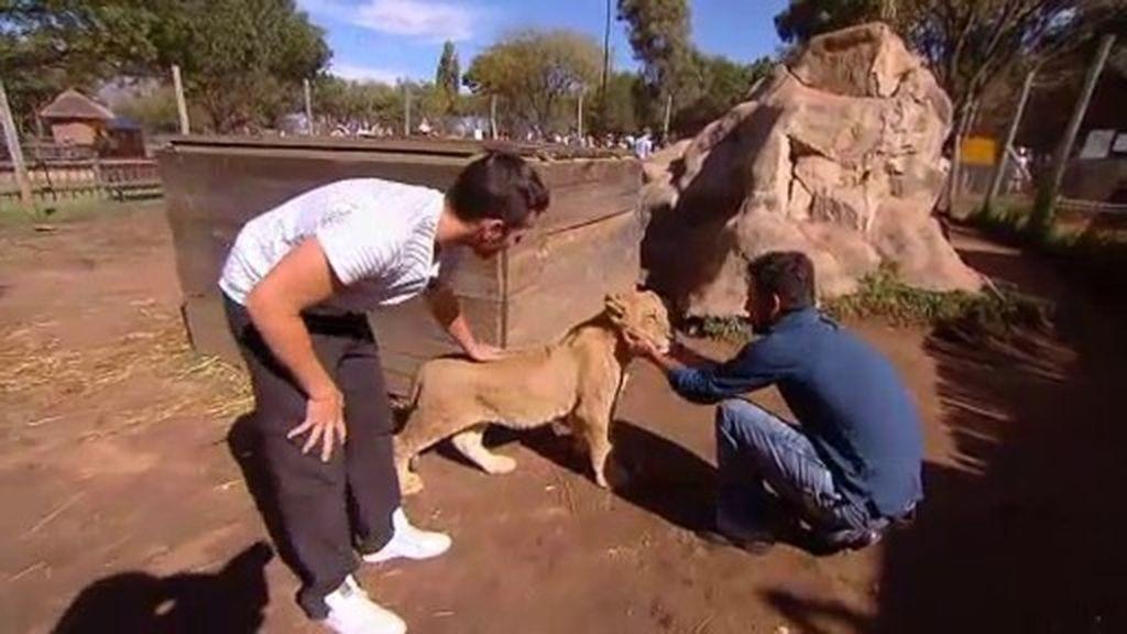 Jota y Freire, entre leones
