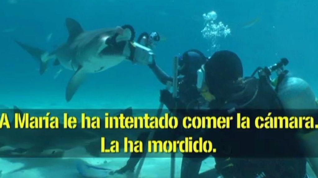 Un tiburón tigre ataca a María
