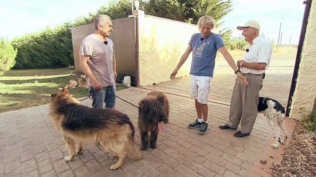 """Presentar a los perros """"con el trasero"""""""