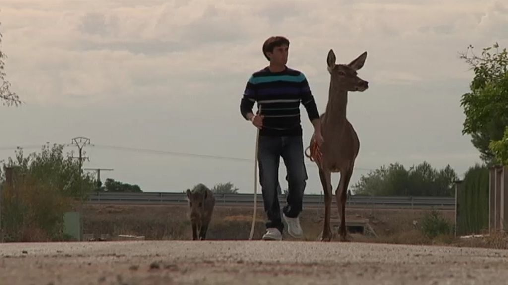 Fernando, 'El Quijote de los animales'