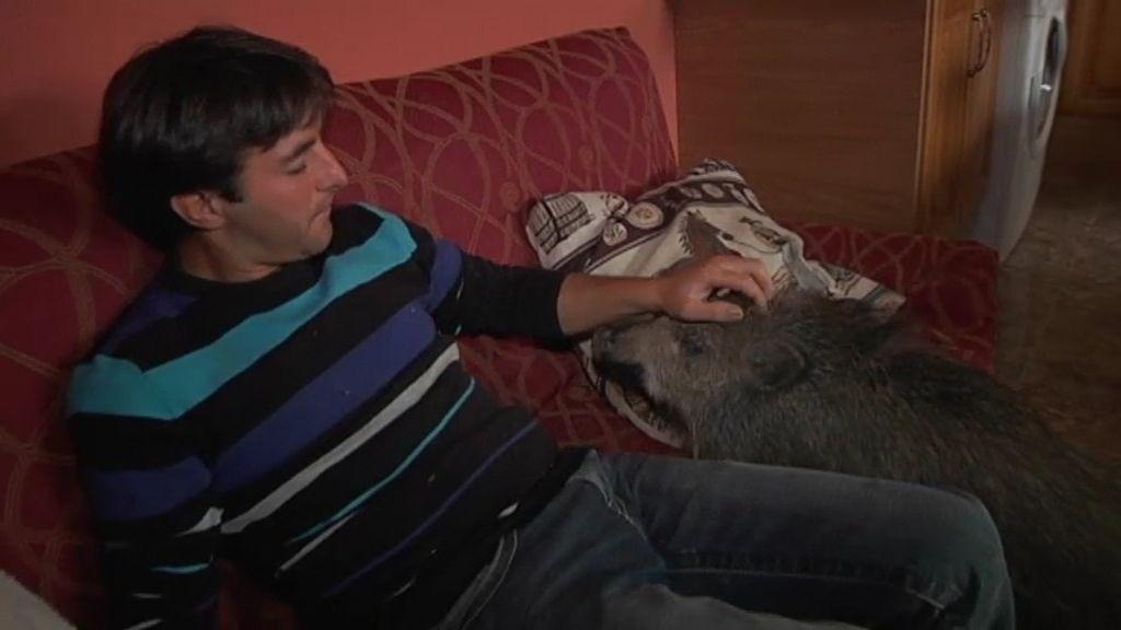 """Fernando: """"Estoy soltero, pero no es por culpa de mis animales"""""""