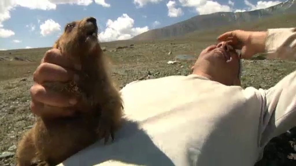 La marmota, ¿el animal más bonito de Mongolia?