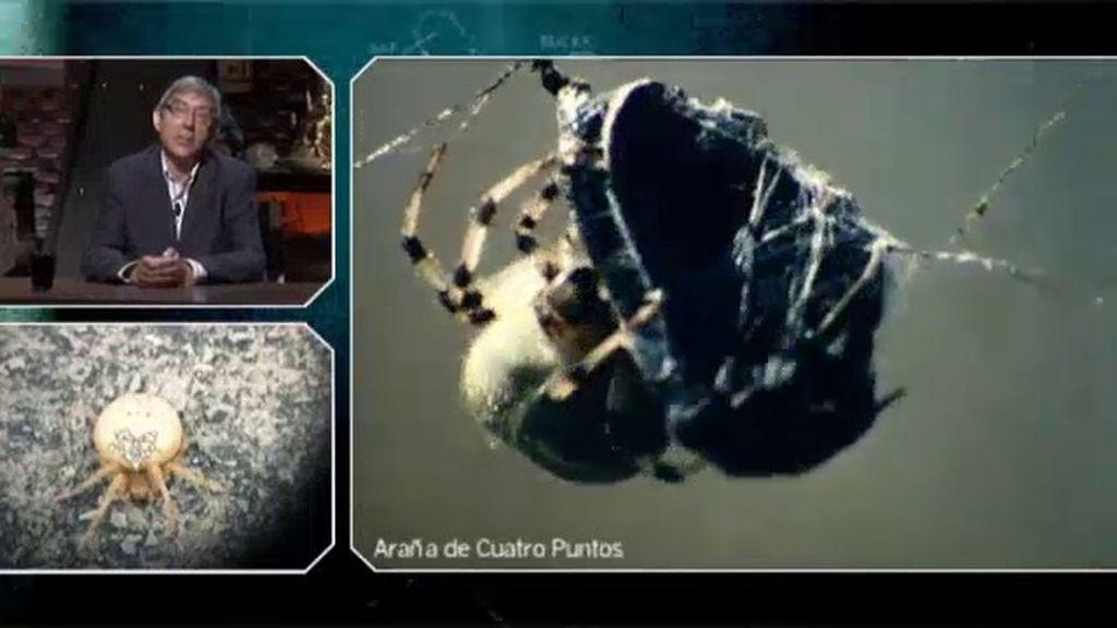 Extrañas criaturas... ¿peligrosas para el ser humano?