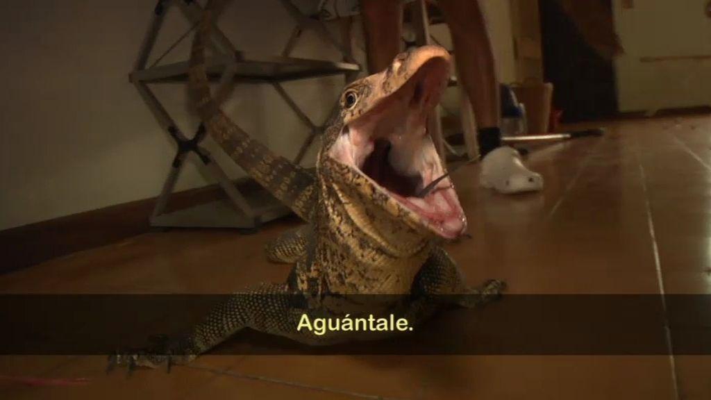 Un enorme reptil aterroriza el barrio