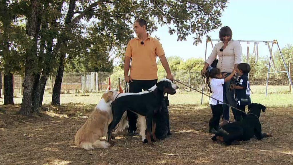 ¡Una familia con diez perros!