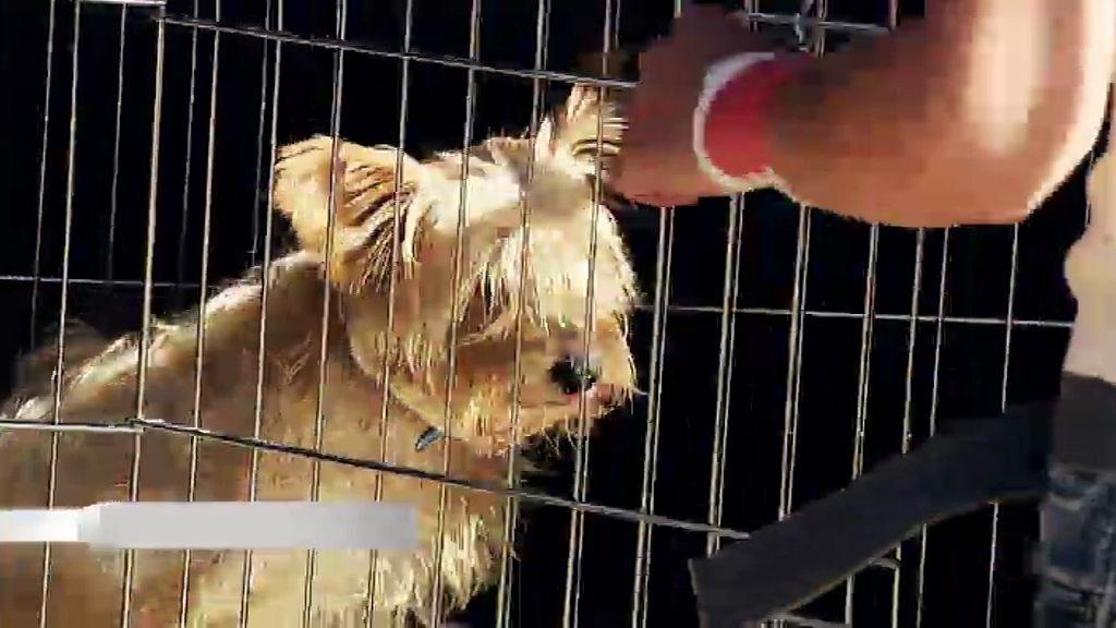 Arturo, un perrito sin amigos