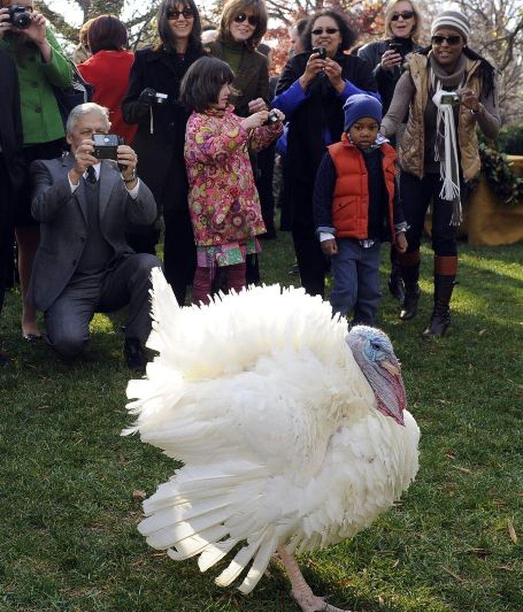 El pavo, agradecido por el indulto, posa para las cámaras