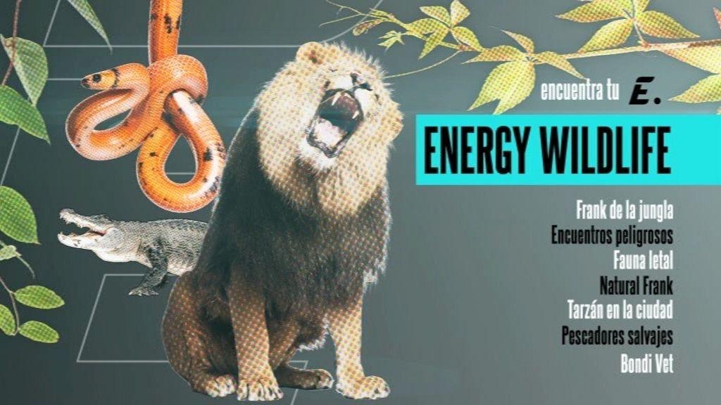 Animales salvajes, personajes únicos y naturaleza, en 'Energy Wildlife'