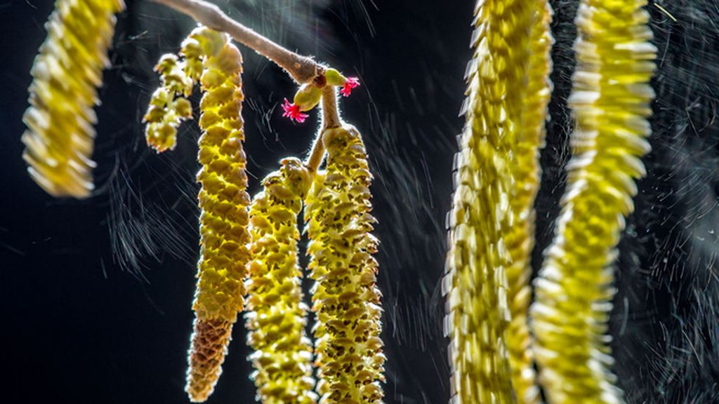 Las flores de un avellano, de Valter Binotto