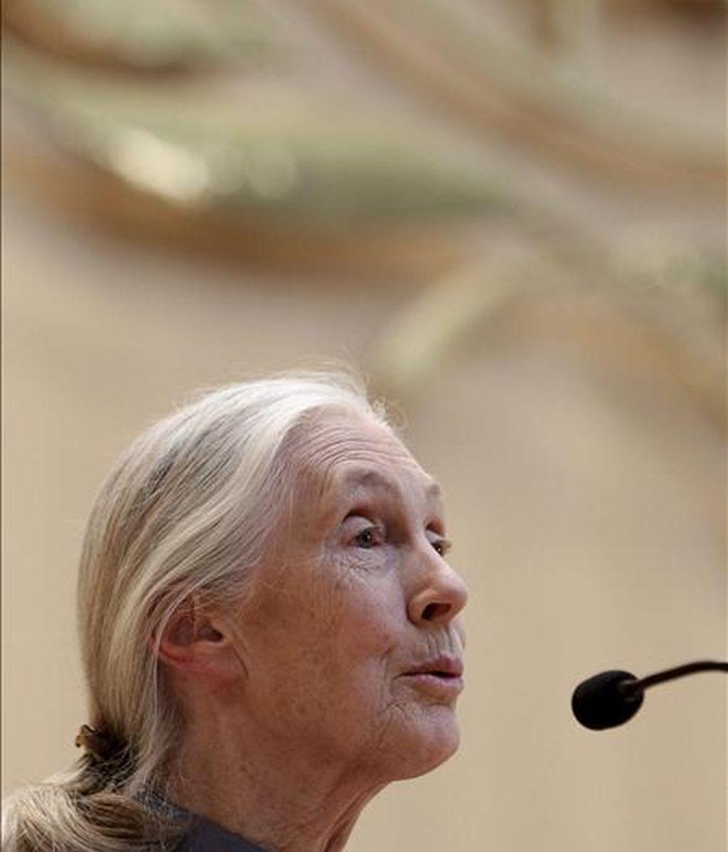La antropóloga y primatóloga británica Jane Goodall. EFE/Archivo