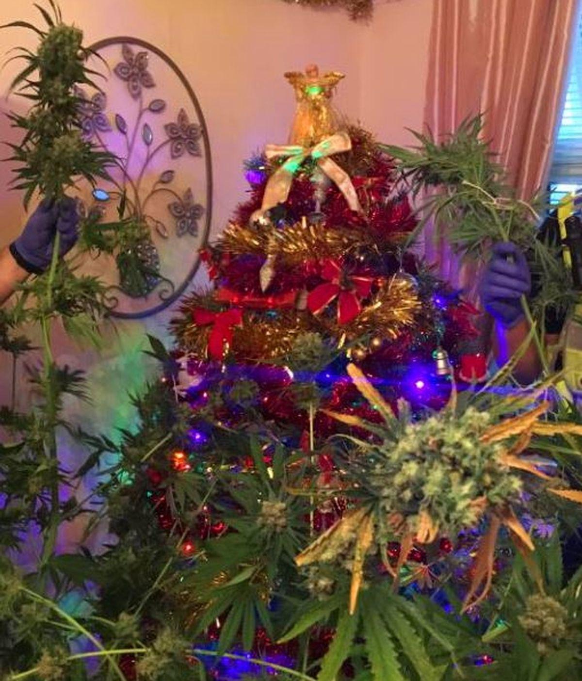 Detenida una pareja que tenía una planta de marihuana como árbol de Navidad