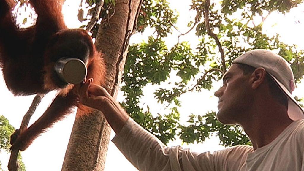 Frank da de beber a un orangután