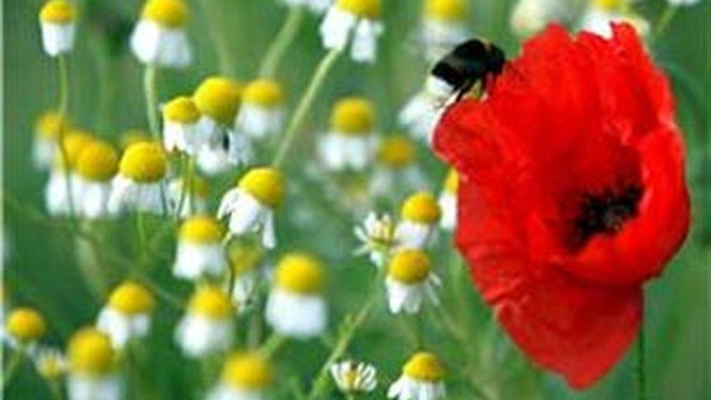 Llega la primavera y con ella las temidas alergias