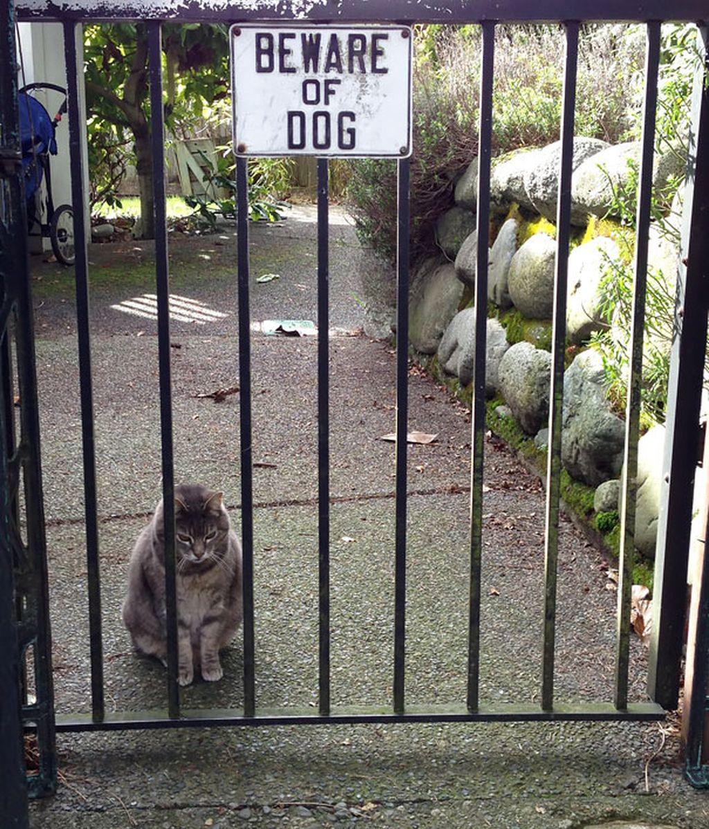 Estas mascotas representan todo menos peligro