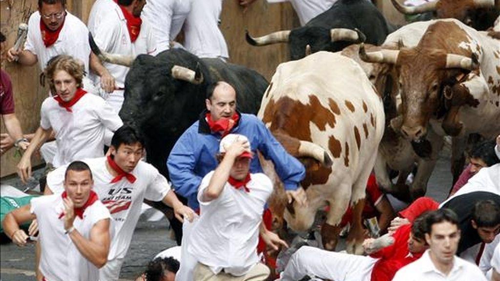 Varios mozos caen entre los astados de la ganadería de Miura durante un encierro de unas fiestas de San Fermín. EFE/Archivo