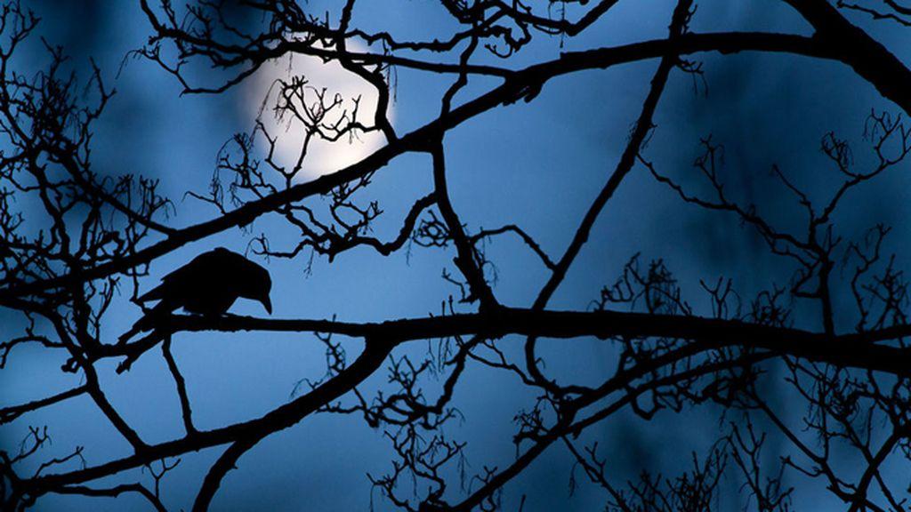 Un cuervo en una noche de cuento de hadas, por Gideon Knight