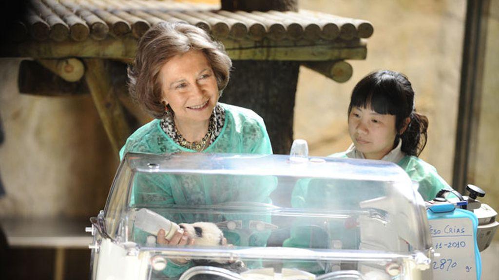 Los otros 'nietos' de la Reina