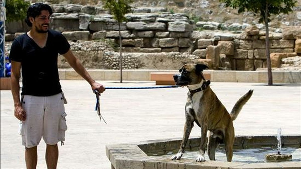 Un perro se refresca en una fuente del casco antiguo de Zaragoza. La Agencia Estatal de Meteorología (Aemet) mantiene activada la alerta naranja, debido a las altas temperaturas, en varias comunidades autónomas. EFE