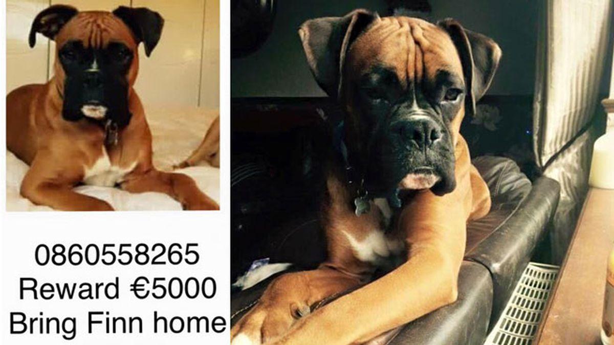 Secuestra a un perro y amenaza con ahorcarle si no pagan el rescate