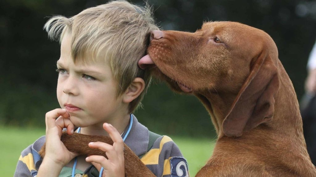 Un niño junto con su perro