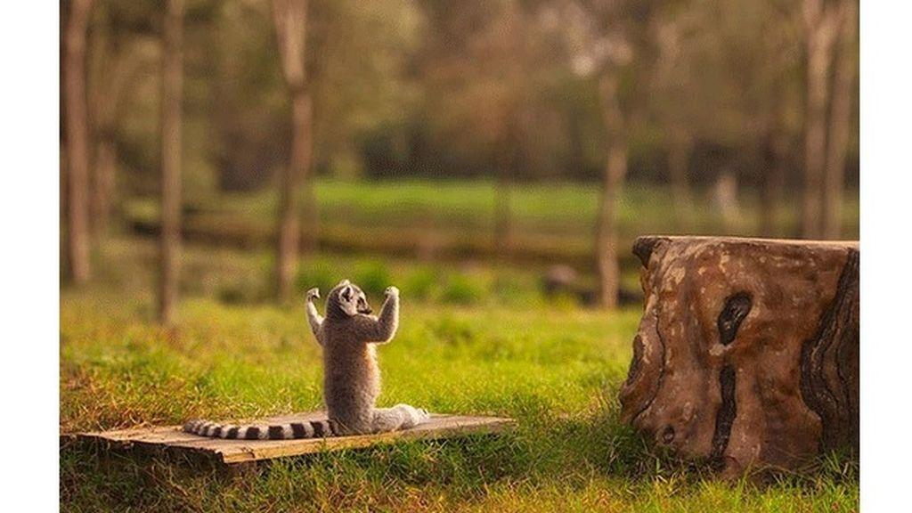 Algunos meditan y se relajan en posturas muy 'zen'