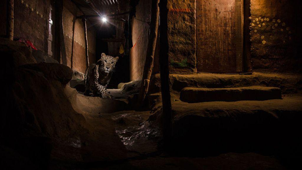 'El gato en el callejón', de Nayan Khanolkar