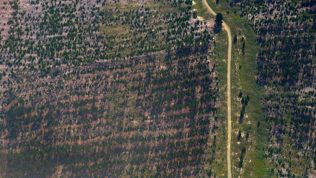 La tala de árboles rompe el paisaje australiano
