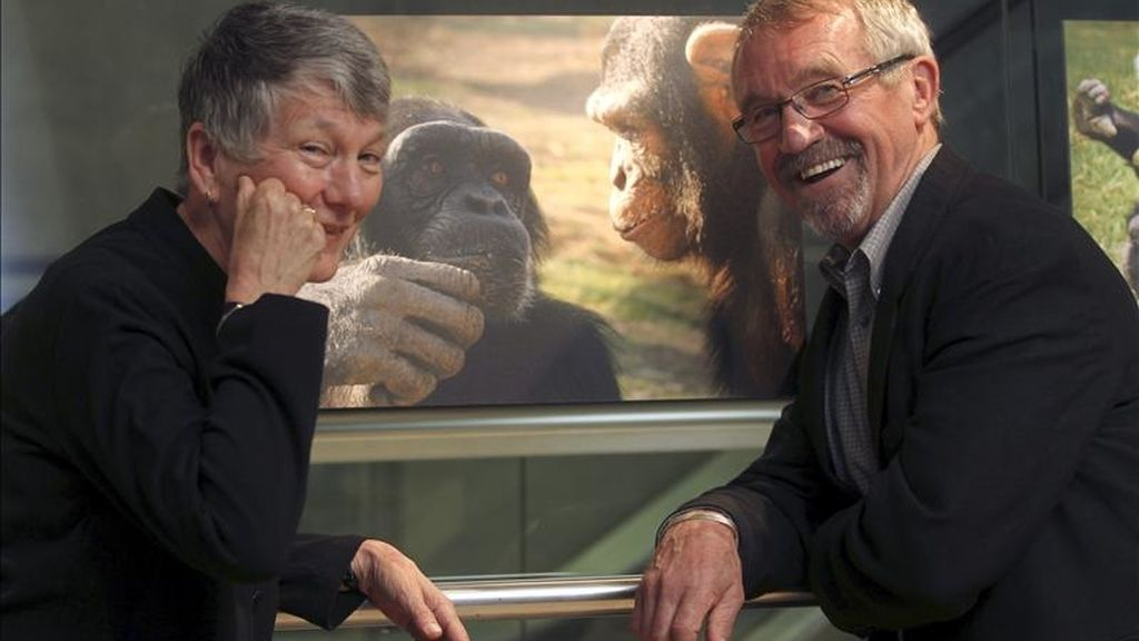 """El matrimonio estadounidense Deborah y Roger S. Fouts, que ha dedicado su vida a combatir la idea de que el lenguaje es el """"último bastión"""" de la singularidad humana y el resultado es más de 40 años de trabajo con unos chimpancés que no sólo han aprendido a comunicarse con la lengua de signos, sino a mentir y hacer poesía, posa hoy en Barcelona. EFE"""