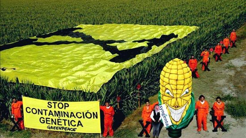 Manifestación de Greenpeace contra el cultivo del maíz transgénico mediante el despliegue de una pancarta sobre una plantación de Villanueva de Gállego, en Zaragoza. EFE/Archivo