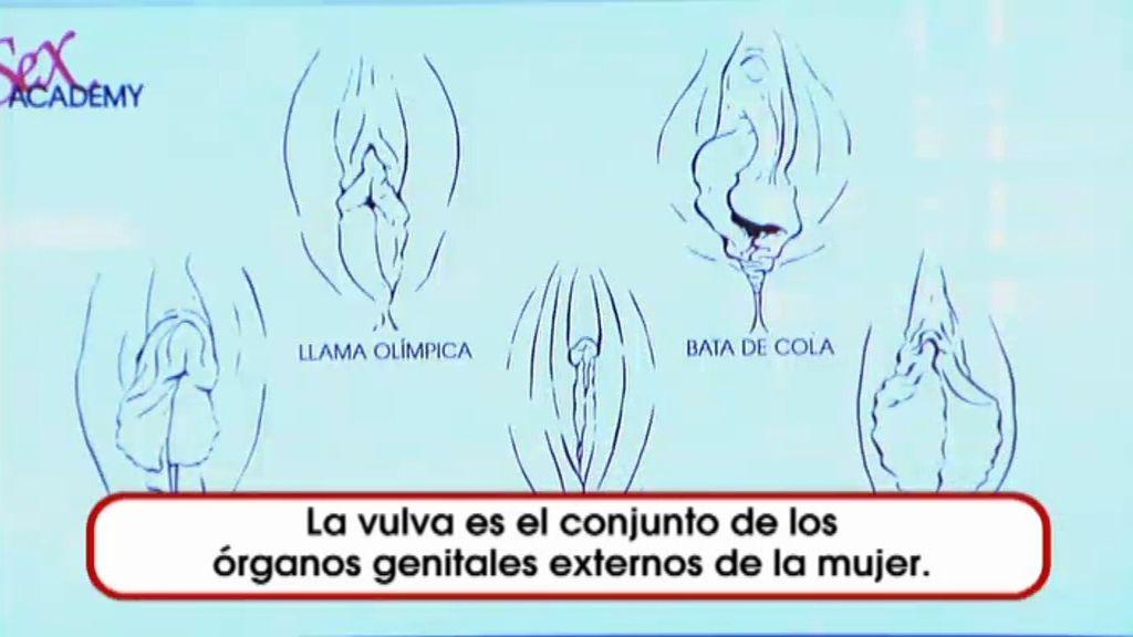 Tipos de Vulvas en 'Sex Academy'
