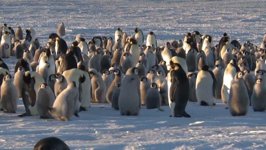 Calleja, rodeado de pingüinos