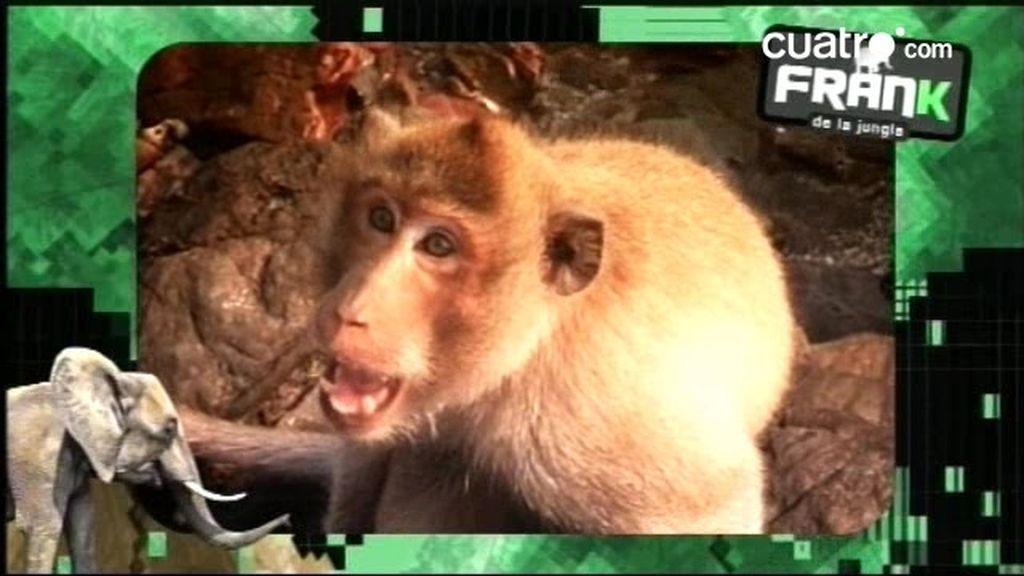 AVANCE: Frank, en Tailandia con más animales que en el arca de Noe