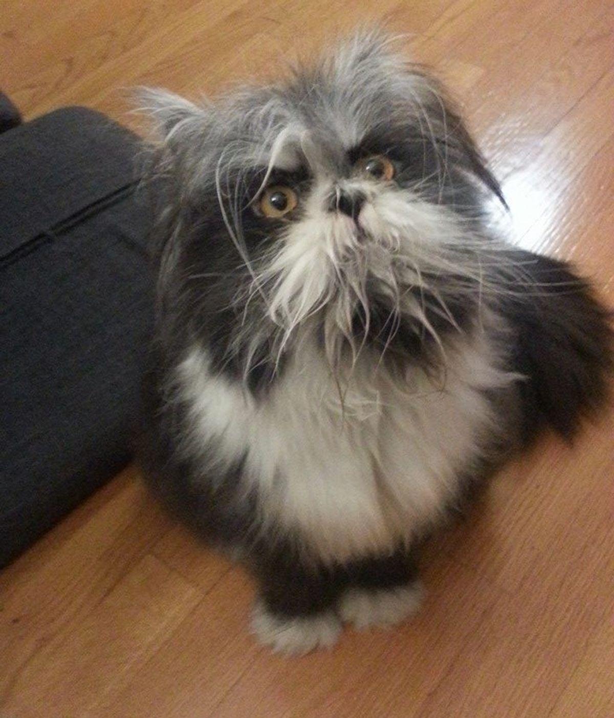 ¿Gato o perro? La foto viral que divide a los internautas