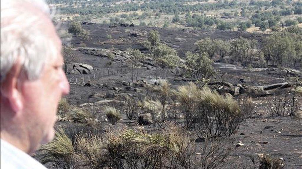 El alcalde de la localidad de Villarino de los Aires, José Martín, observa la zona afectada por el incendio forestal originado el pasado 30 de julio que ha arrasado un millar de hectáreas. EFE