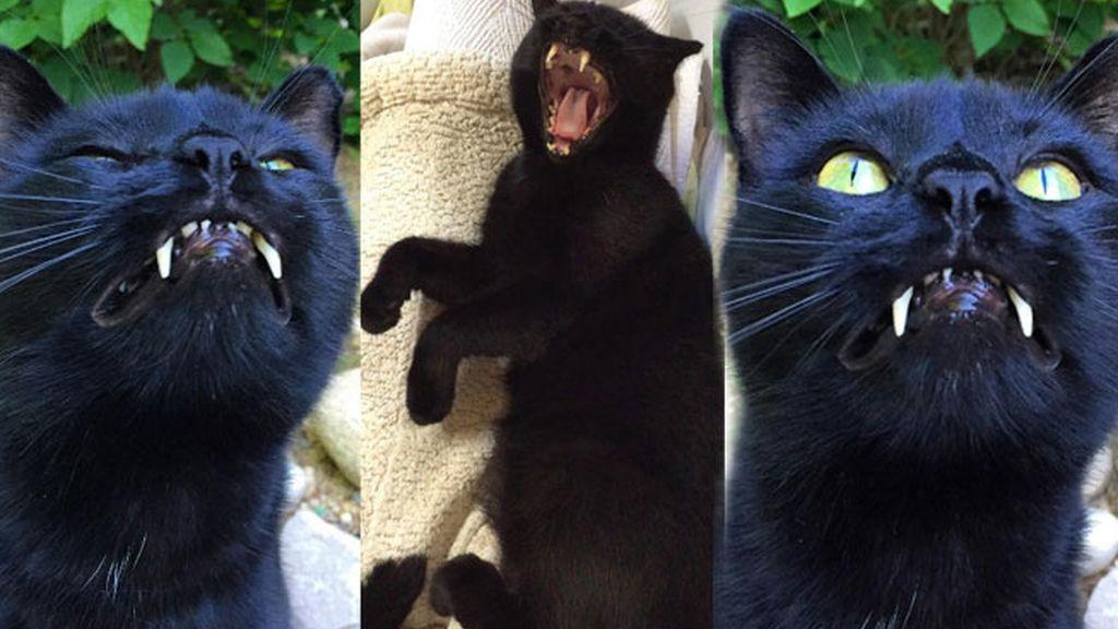El gato al que nadie quería se convierte en estrella en Instagram