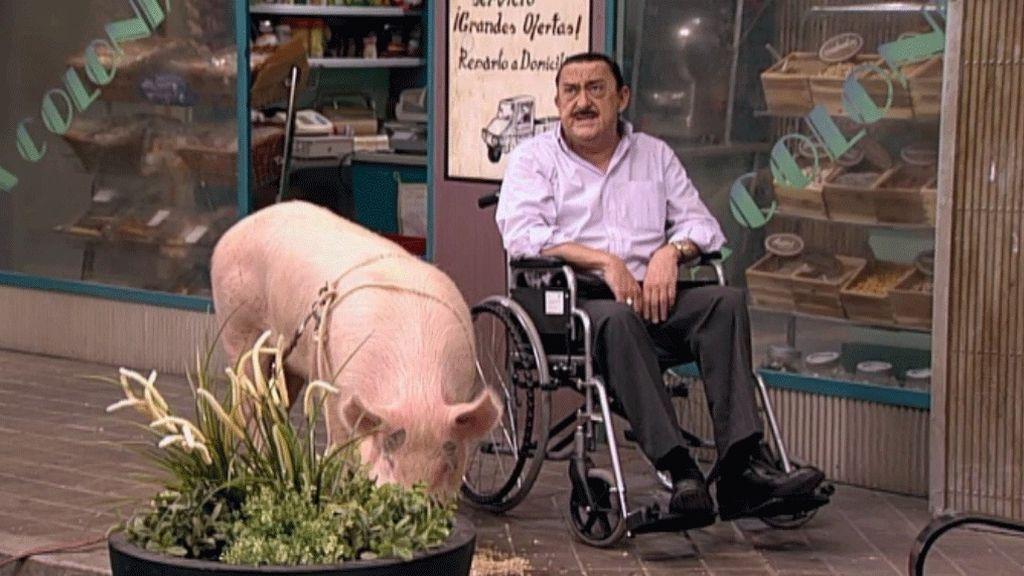 El cerdo de Mauricio