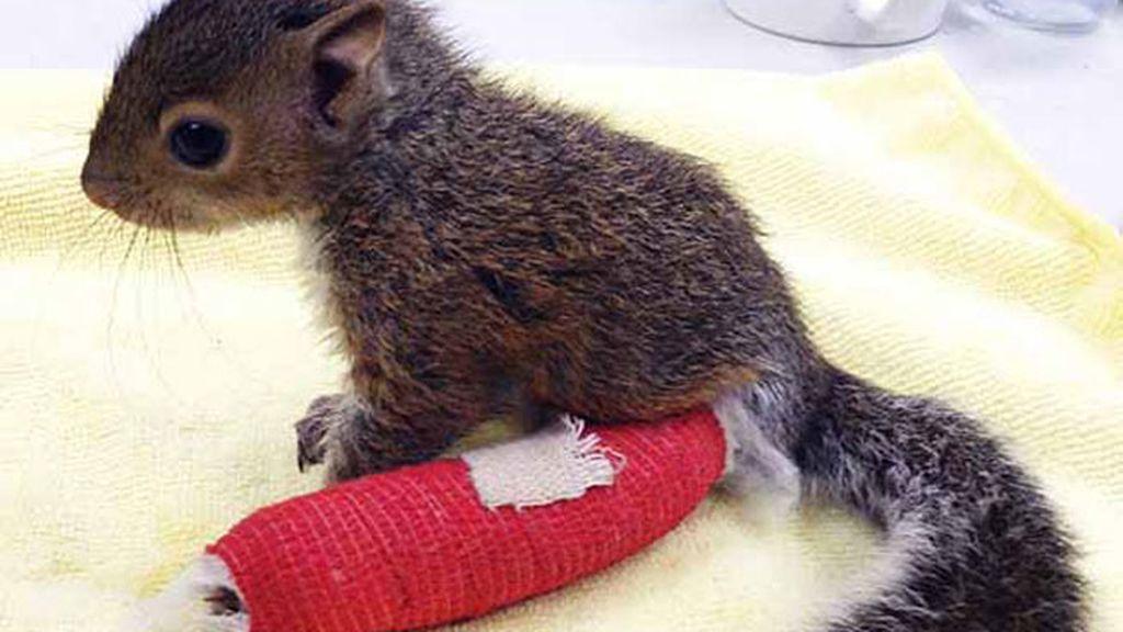 Estos adorables animalitos tratan de sanar sus huesos rotos