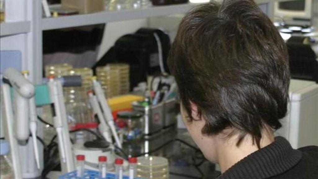 Una investigadora trabaja en un laboratorio. EFE/Archivo