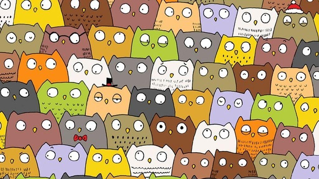 El reto visual de los búhos y el gato