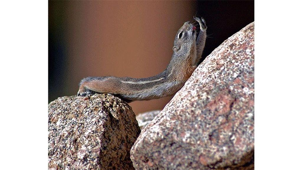 Los animales también hacen yoga