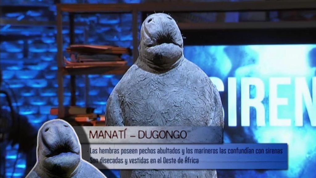 Manatí - Dugongo