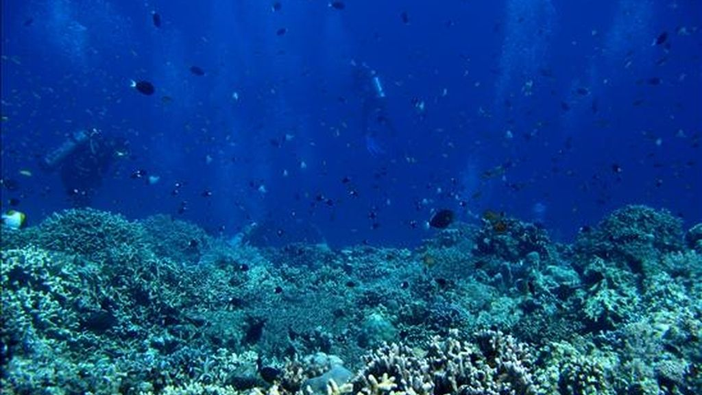 Imagen del arrecife Apo, Mindoro Occidental, al sur de Manila, Filipinas. EFE/Archivo