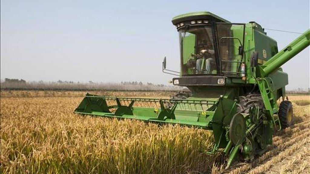 El Ministerio de Industria y Comercio aseguró que gran parte de los productos agrícolas colombianos tendrán preferencias arancelarias en el mercado canadiense. EFE/Archivo