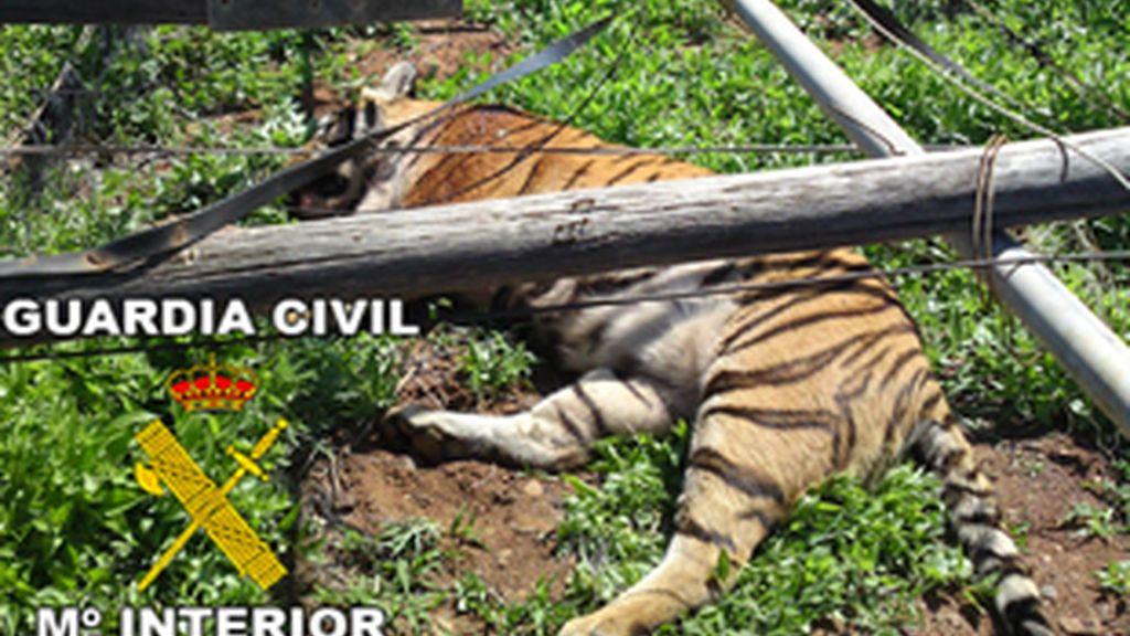 Las autoridades han tenido que realizar un gran esfuerzo para evitar daños mayores. Foto: Guardia Civil