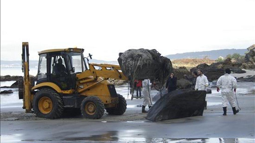 """Con el empleo de una pequeña máquina excavadora y la ayuda de personal de la Coordinadora para el Estudio de los Mamíferos Marinos, se retiró hoy el cuerpo de un cachalote que había varado en abril en la playa de """"A Coviña. EFE"""