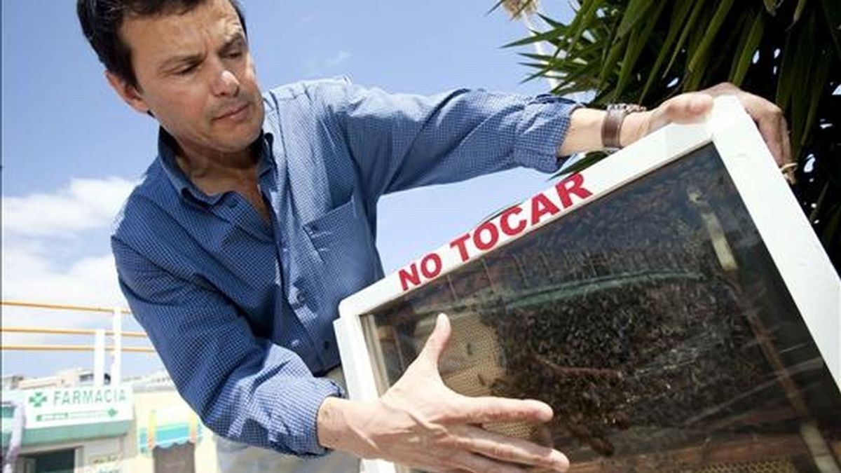 El apiterapeuta Ramón Hernández durante la entrevista que ha concedido a EFE para hablar sobre la utilización del veneno de la abeja autóctona canaria para tratar a domicilio enfermedades varias. EFE